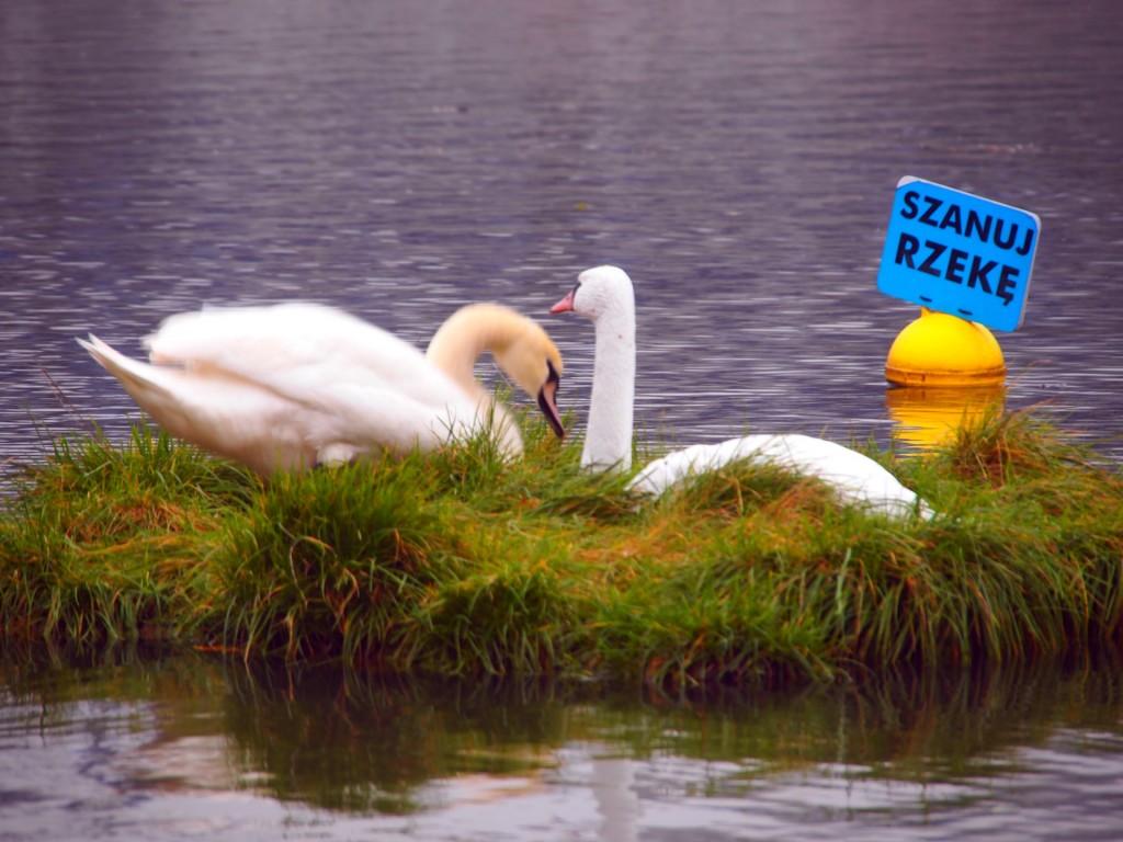 Pływające Ogrody Fundacja OnWater.pl